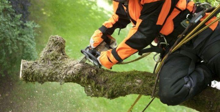 Демонтаж деревьев